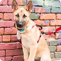 Adopt A Pet :: Steve Johnson - Jersey City, NJ