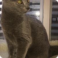 Adopt A Pet :: Vinita - Colorado Springs, CO