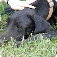 Adopt A Pet :: Emma - Martinsburg, WV