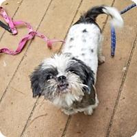Adopt A Pet :: Daisy - Polson, MT