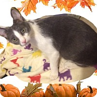 Adopt A Pet :: Sky - Madisonville, LA