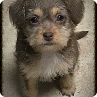 Adopt A Pet :: Jellie - Los Alamitos, CA
