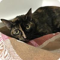 Adopt A Pet :: Stefana - Elyria, OH