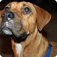 Adopt A Pet :: D12 Litter-Carmen San Diego (Mom) - Livonia, MI