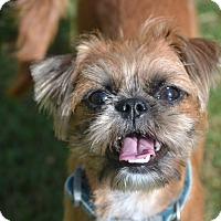 Adopt A Pet :: Joy - Bedminster, NJ