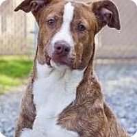 Adopt A Pet :: Ginger - Lincolnton, NC