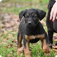 Adopt A Pet :: Dorte - Groton, MA