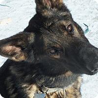 German Shepherd Dog Mix Dog for adoption in Minneapolis, Minnesota - Titan