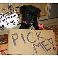 Adopt A Pet :: Kahlua - Hagerstown, MD