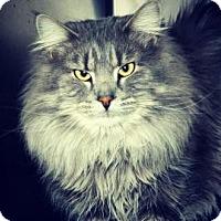 Adopt A Pet :: Majestic - Cheyenne, WY