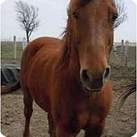 Adopt A Pet :: Dusty - Dewey, IL