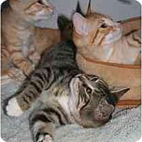 Adopt A Pet :: Cherise - Marietta, GA