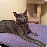 Adopt A Pet :: Smokey Boy - Cerritos, CA