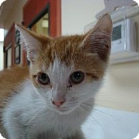 Adopt A Pet :: Maxine - Miami, FL