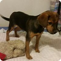Adopt A Pet :: Rowan - Detroit, MI