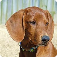 Adopt A Pet :: *Rayni - PENDING - Westport, CT