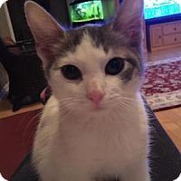 Adopt A Pet :: Katy - East Hanover, NJ