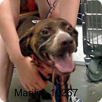 Adopt A Pet :: Marilyn - baltimore, MD