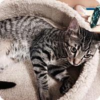 Adopt A Pet :: Chester - Atlanta, GA
