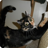 Adopt A Pet :: Bahamas - Milwaukee, WI