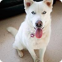 Adopt A Pet :: Atticus - San Francisco, CA