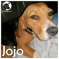 Adopt A Pet :: JoJo - Chicago, IL