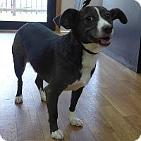 Adopt A Pet :: Jack - Manning, SC