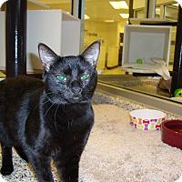 Adopt A Pet :: Amethyst - Aiken, SC