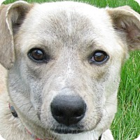 Adopt A Pet :: Sierra - Schaumburg, IL