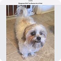 Adopt A Pet :: Teddy - LEXINGTON, KY