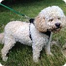 Adopt A Pet :: Bennington