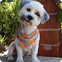 Adopt A Pet :: Lucus - SAN PEDRO, CA