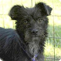 Adopt A Pet :: Poppy - Sunnyvale, CA