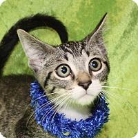 Adopt A Pet :: Ralphie - Jackson, MI