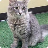 Adopt A Pet :: Nevada - Romeoville, IL