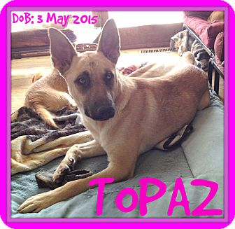 German Shepherd Dog Mix Dog for adoption in Middletown, Connecticut - TOPAZ