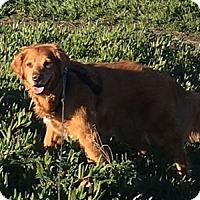 Adopt A Pet :: Jessie - Pacific Grove, CA