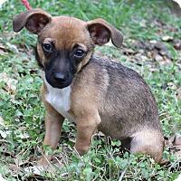 Adopt A Pet :: KONA - Jacksonville, FL