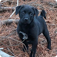 Adopt A Pet :: Baloo - Little Compton, RI