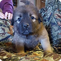 Adopt A Pet :: Fred-pending - Manchester, NH
