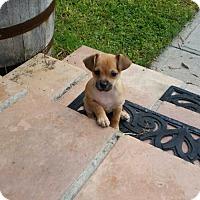 Adopt A Pet :: Quincy - Del Rio, TX