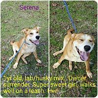 Adopt A Pet :: Serena - New Haven, CT