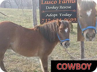 Pony - Other Mix for adoption in Malvern, Iowa - Cowboy
