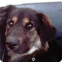 Adopt A Pet :: Hope - MONTE VISTA, CO