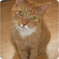 Adopt A Pet :: Sherman - Hamburg, NY