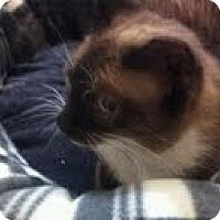 Adopt A Pet :: Tony - Modesto, CA