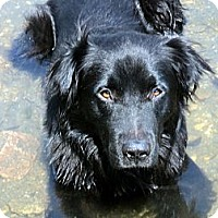Adopt A Pet :: Morrison - Denver, CO