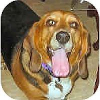 Adopt A Pet :: Maisey - Phoenix, AZ