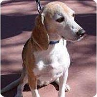Adopt A Pet :: Scouty - Phoenix, AZ