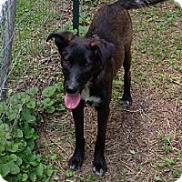 Adopt A Pet :: Jessie - Hixson, TN